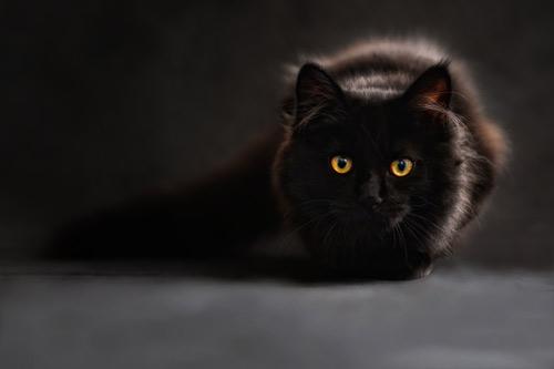 USE.cat-694730